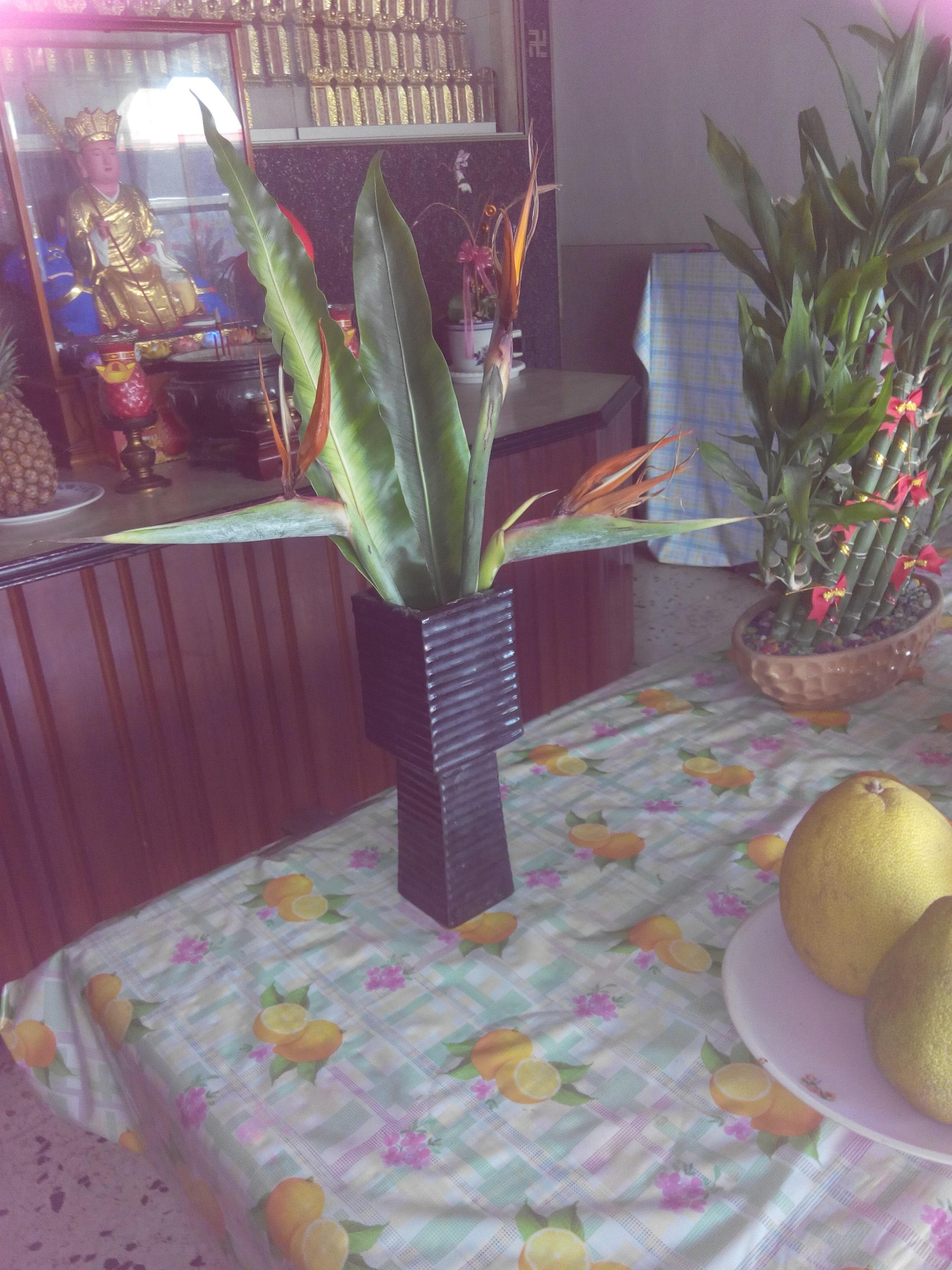 創意花卉供佛